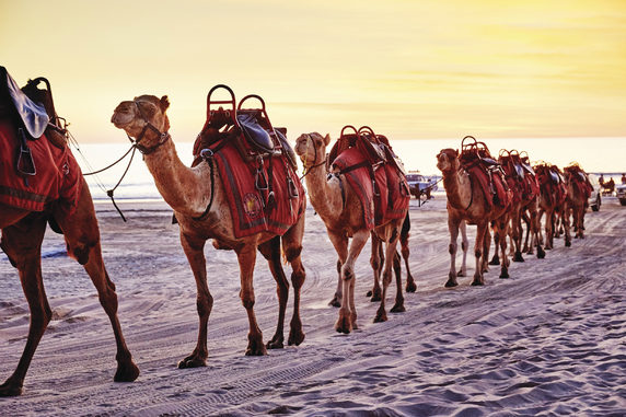 Camel riding along Cable Beach, Broome