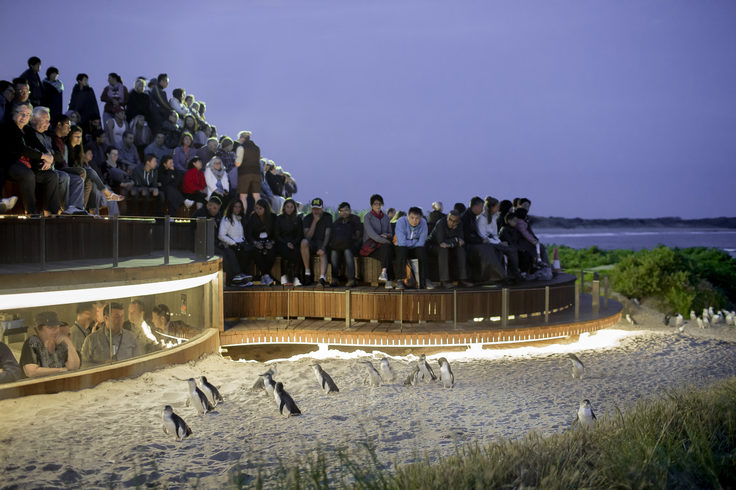 Penguin Parade viewing platform
