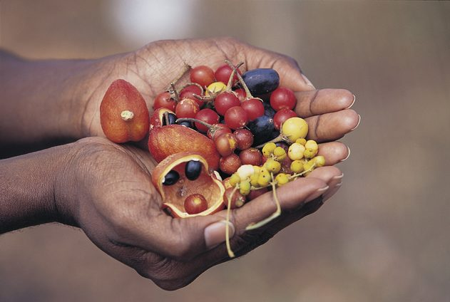 (Foraging for Bush Tucker. Image credit: Tourism Australia)
