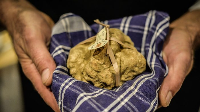 Image: The prized white truffles of Alba.