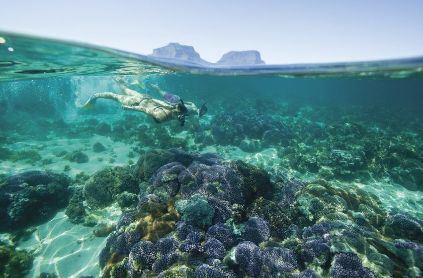 Snorkelling, Lord Howe Island. Destination NSW