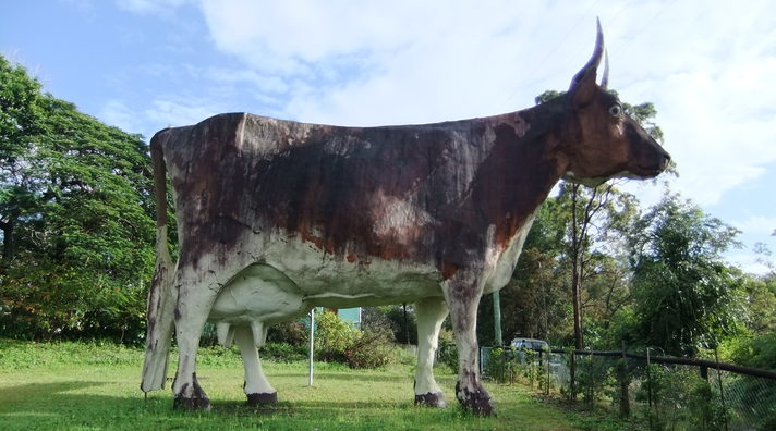 The big cow, Kulangoor