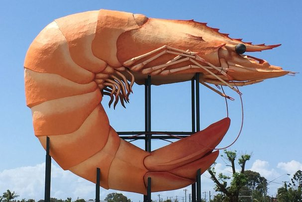 Ballina's Big Prawn. Image credit: Echonet Daily