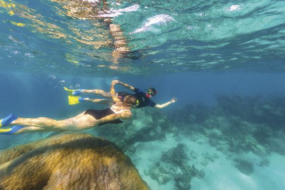Snorkelling, Ningaloo Marine Park