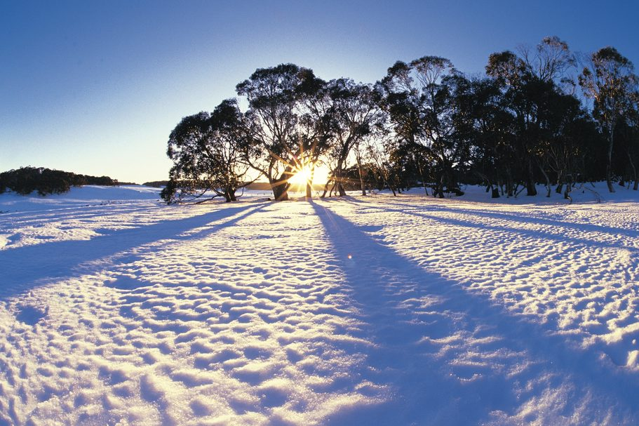 Snow, Wonnangatta National Park, VIC - Tourism Australia