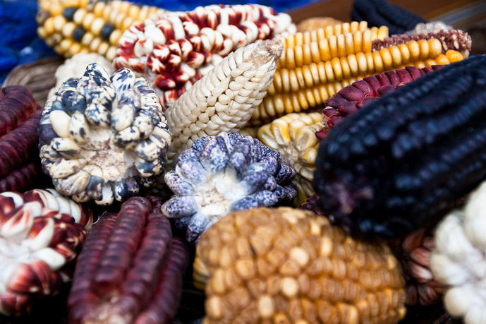 Corn varieties, Cuzco. Image credit: Julie Edgley