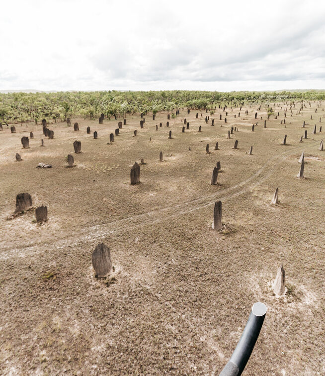 Termite Mounds at Litchfield National Park -Tourism NT & Ashley Dobson