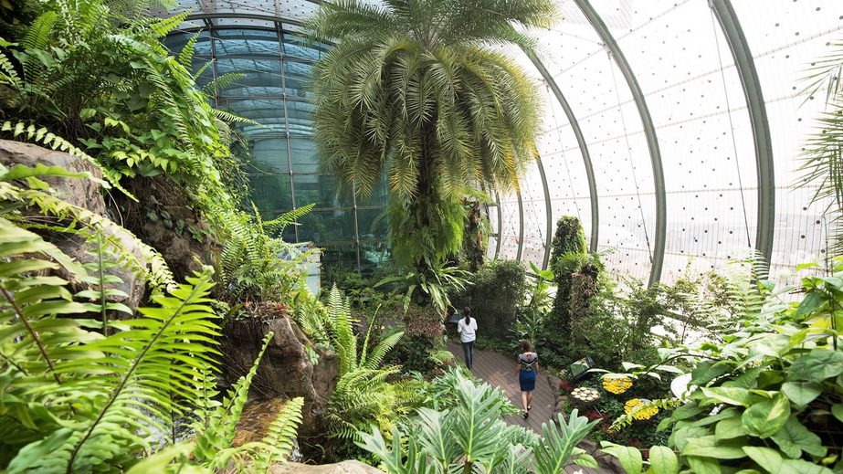 Singapore Changi's butterfly garden. Credit: Singapore Changi Airport.