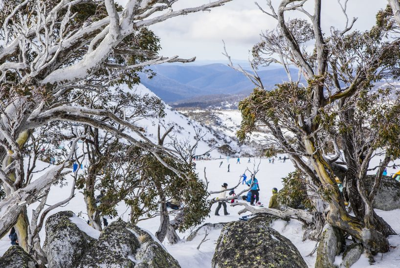 Blue Cow, Perisher. Credit Destination NSW b