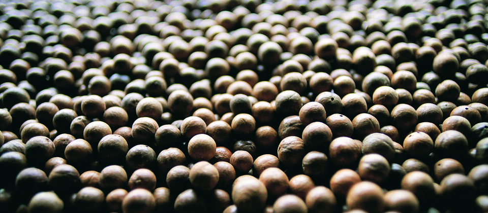 Macadamia shells: the material of the future