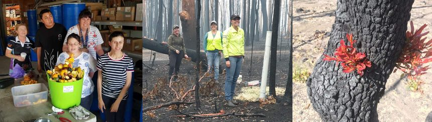 Community Spirit after the bushfires