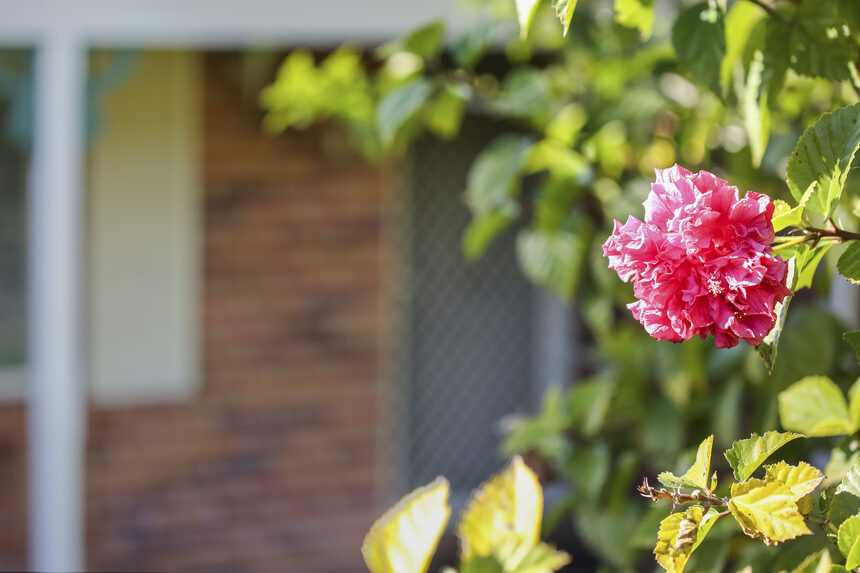 Front of brick home with pink flower