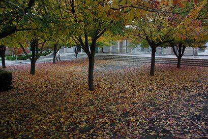 Bowral courtyard