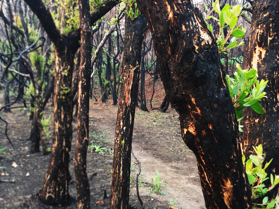 regrowth after the fires