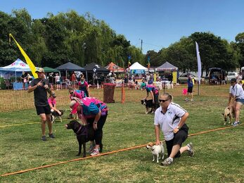 Dogs In the Park NSW Sutherland Shire