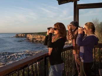 Whale watching at Cape Solander