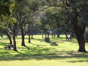 Wide view of grassy parkland dotted with mature trees and picnic tables Photo Natasha Webb DPIE