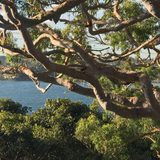 Bundeena Treehouse