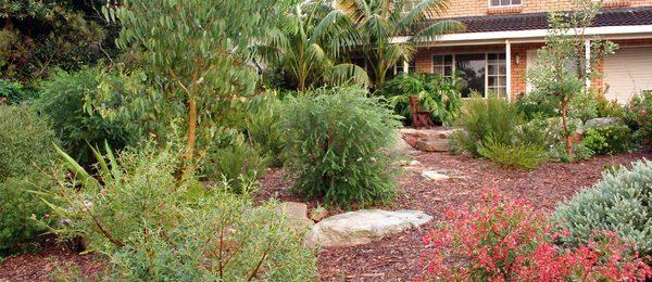 Beautiful native garden