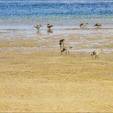 Towra Beach
